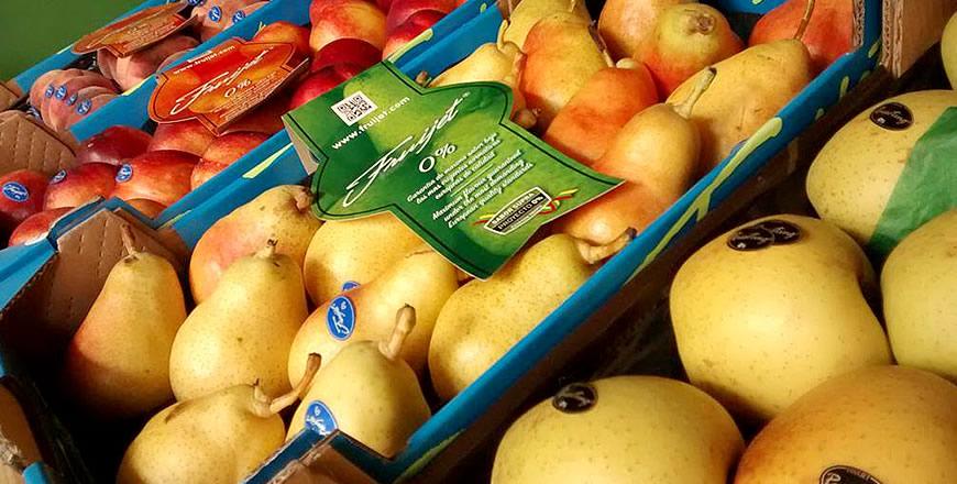 Comercial de Frutas y Hortalizas S.A. (COFROHOSA)
